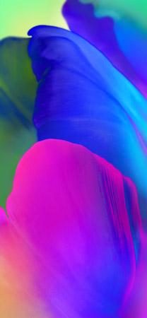 LG V35 ThinQ Wallpapers